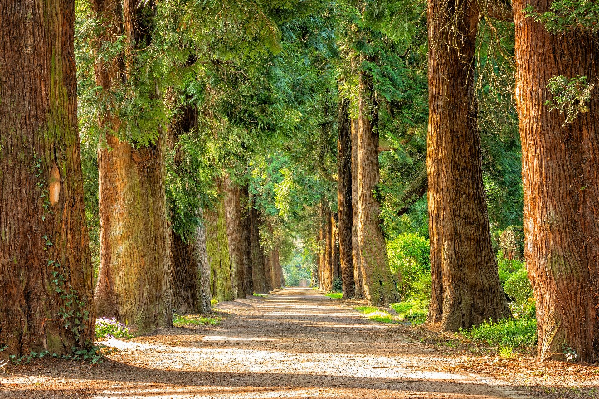 Walk the Nature Trail